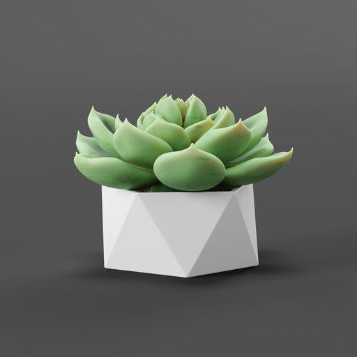 Thumbnail: Succulent plant