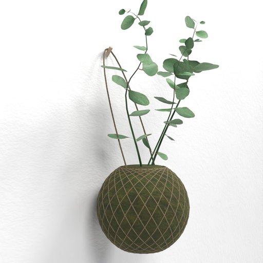 Thumbnail: Eucalyptus Plant on wall hanging moss ball (kokedama)