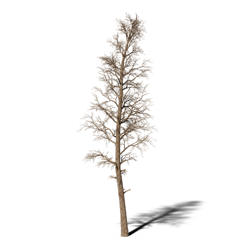 Thumbnail: Dead Pine v2