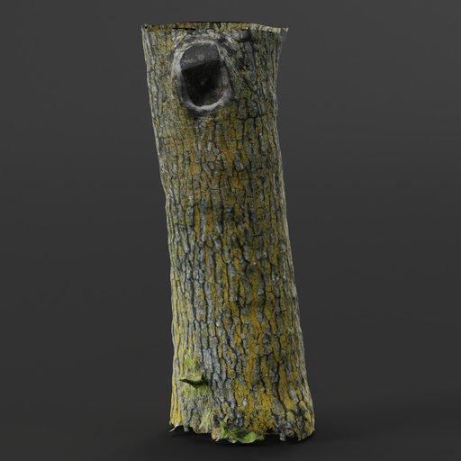Thumbnail: Small Photoscanned Tree 05