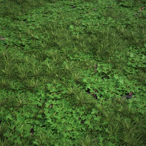 Wild Grass with clover Large area