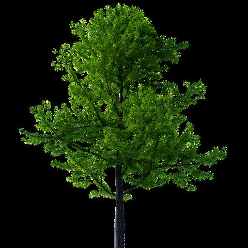 Thumbnail: Gimko Tree