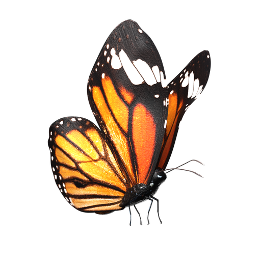 Thumbnail: Butterfly-Rigged