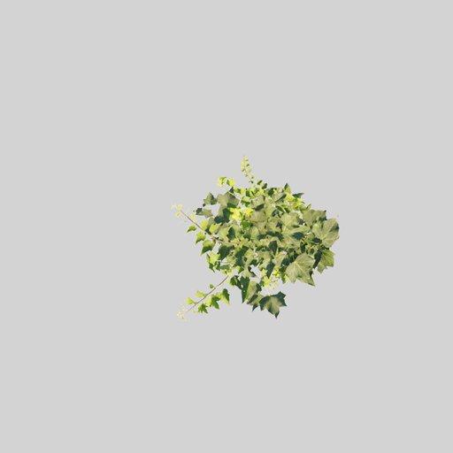 Building decor Ivy