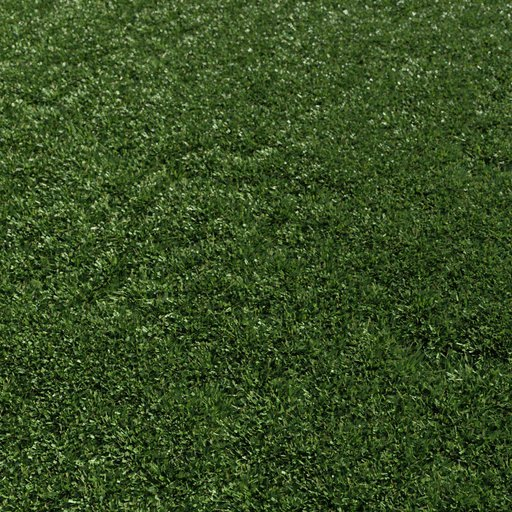 Mown Grass Large area