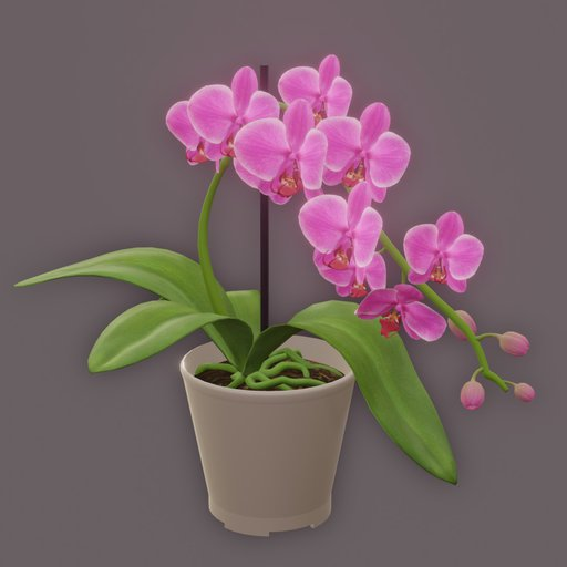Thumbnail: Pink Orchid