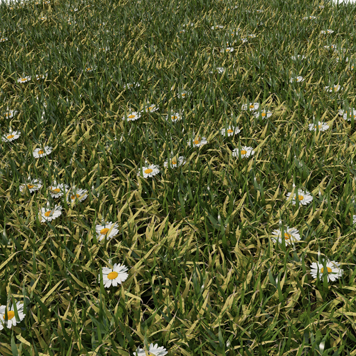 Thumbnail: Stellaria dichotoma Field