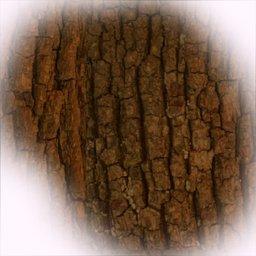 Thumbnail: bark