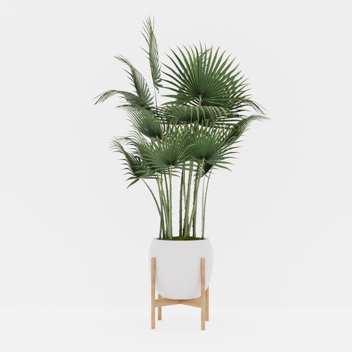 Thumbnail: Palm