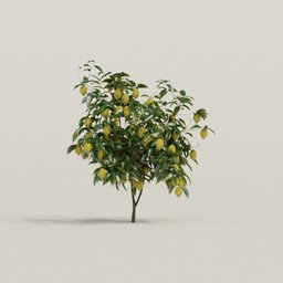 Thumbnail: Meyer Lemon Tree