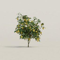 Thumbnail: Meyer Lemon Tree