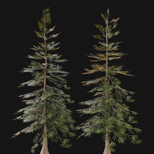 Thumbnail: Norway Spruce Tree SML 01