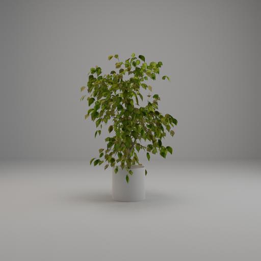 Thumbnail: Small Tree 003