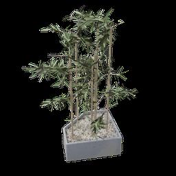 Thumbnail: Bamboo Plant