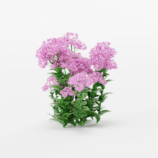 Thumbnail: Stonecrop bouquet