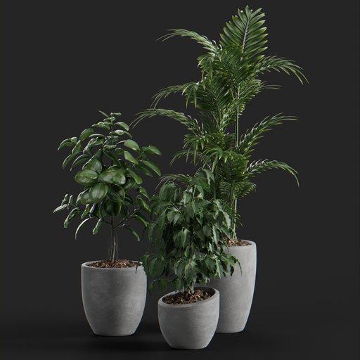 Thumbnail: Aria plant set