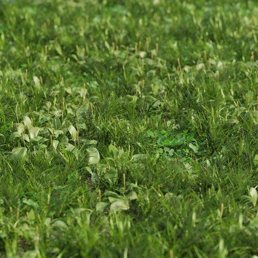 Grass mix - plantago and clover