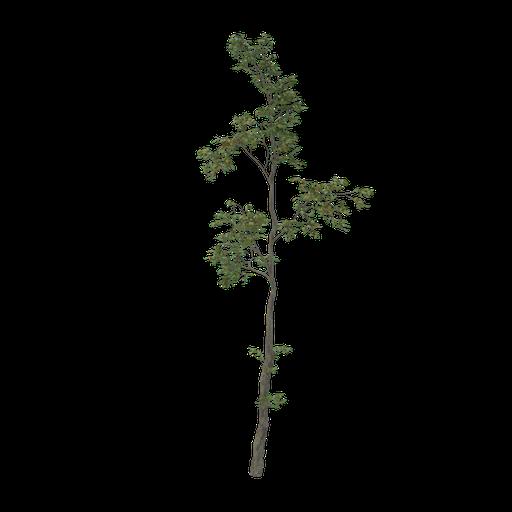 Thumbnail: Thin tree V3
